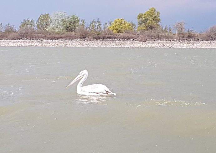 Birdwatching @ Lake Kerkini and More | Guest Bloggers